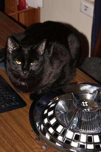 Hubcap Kool Kat ~ Blacky.... | by Michelle ~ Blacky ~ Champaz's Captures....