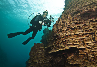 Amazing reef formation- Chris Willson | by Okinawa Nature Photography