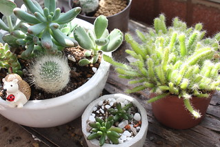 succulent plants | by oo_ya2004