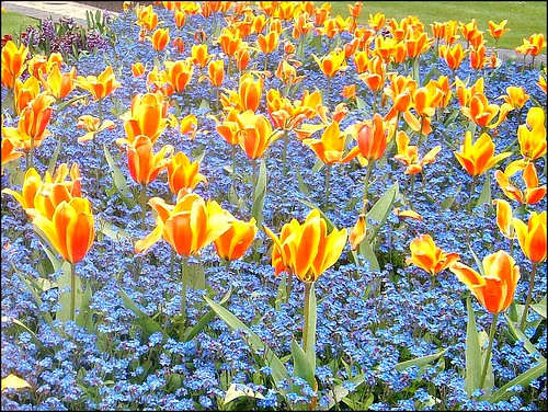 Tulips ... | by ** Janets Photos **
