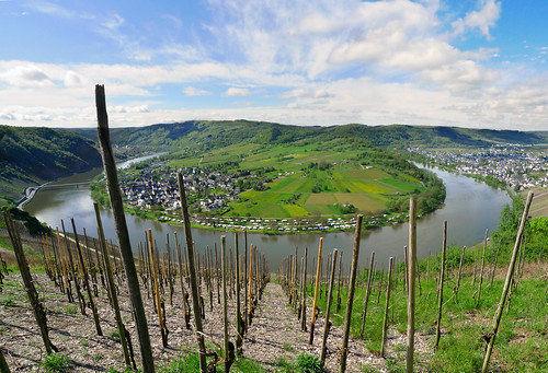 Riesling vinyards at heart of the winding Moselle River | by B℮n