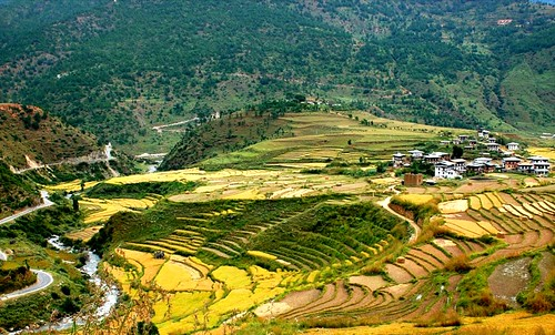 Rice fields in Bhutan, Himalaya | by Mandala Travel