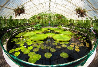 Waterlily House | by poppet with a camera