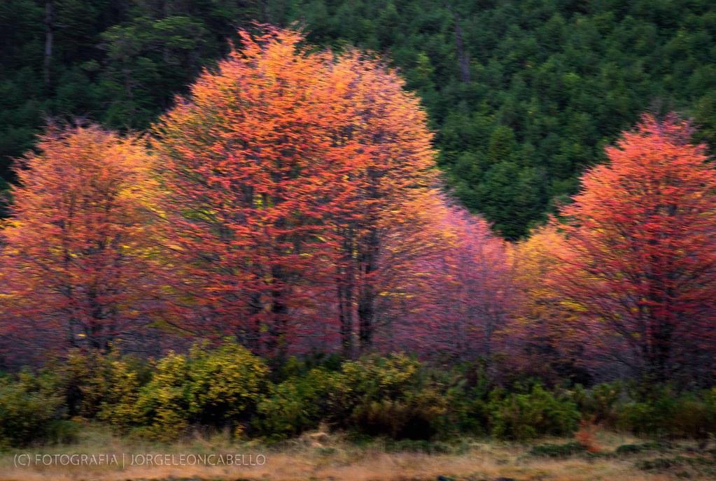 Paisajes de Otoño - Antillanca (Patagonia - Chile)   Flickr