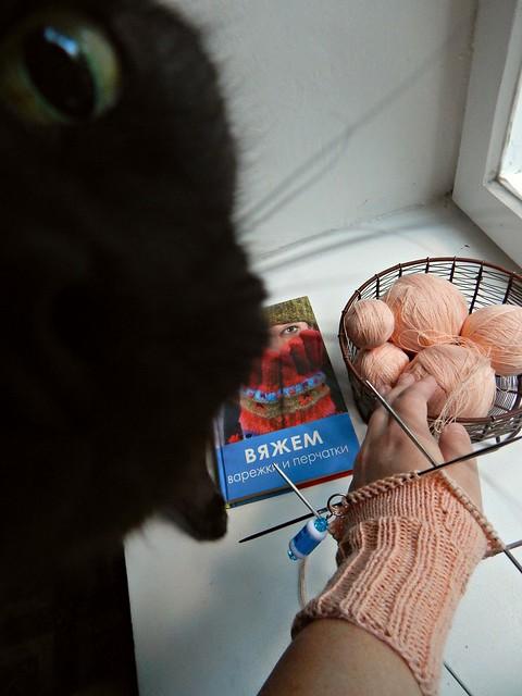 новая варежка и чёрный кот Муся | horoshogromko.ru