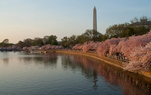 Tidal Basin and Washington Monument | by darceyb