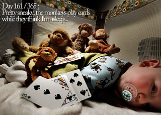 Day 161 / 365 : Pretty sneaky, the monkeys play cards while they think I'm asleep... | by Chris Kryzanek
