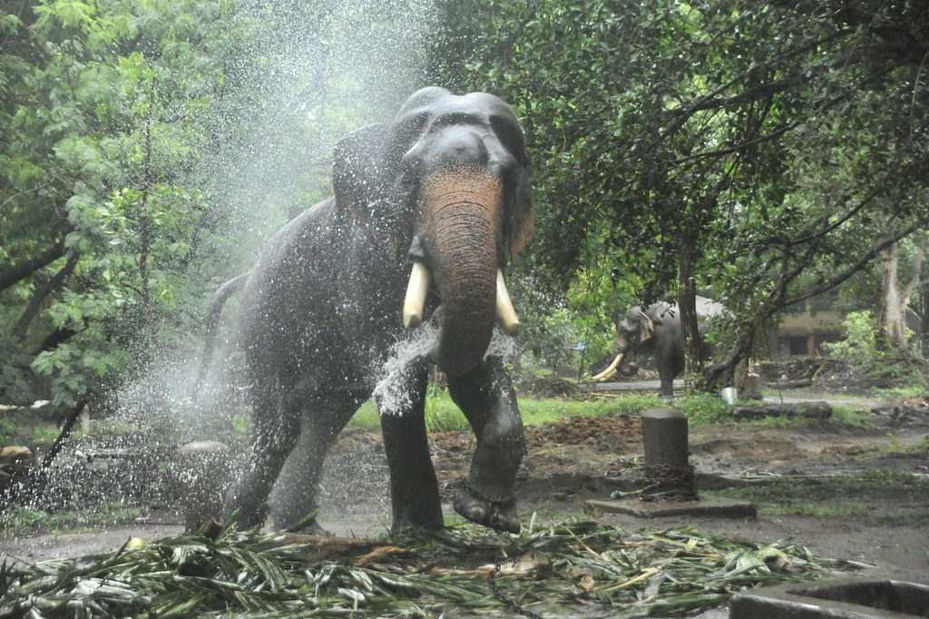 incredible india gods own country kerala nature bountif flickr