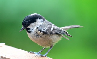 Coal Tit | by GemElle Photography - off & on sorry