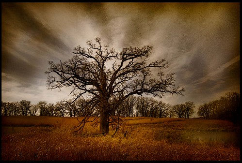 Lonesome Tree | by philip1120