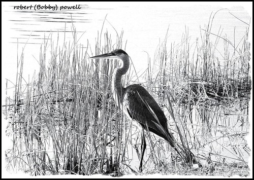black single men in powell county Powell county is located slightly east of central kentucky  below are the  number of slave owners, slaves, free blacks, and free mulattoes for.