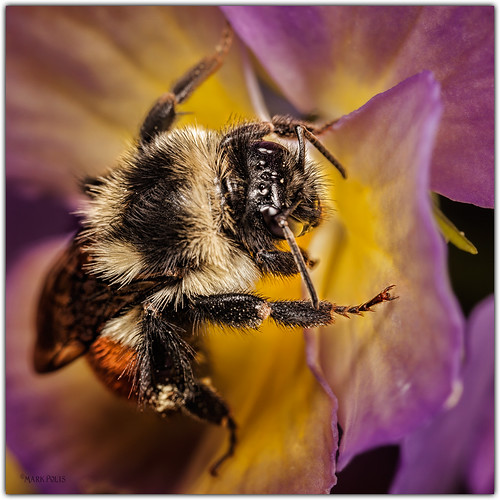 Bee Cause | by b.d.bop