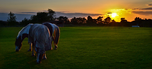 Grazing At Sundown | by Keenan_McNamara