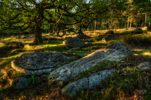 Longshaw_250512_0352 | by Steve Bark
