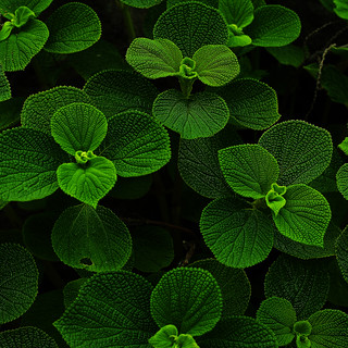 Beautiful Green Leaves | by milky-love-cats