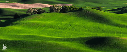 Palouse Greens | by Chris Ross Photography