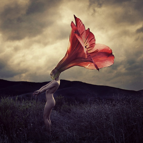 thorns that flowers grow | by brookeshaden