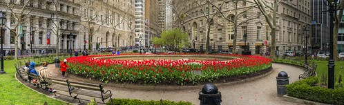 Bowling Green Park Tulips Panorama | by Michael.Lee.Pics.NYC