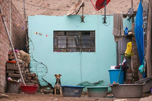 Every house needs a dog alex proimos flickr for Every dog needs a home