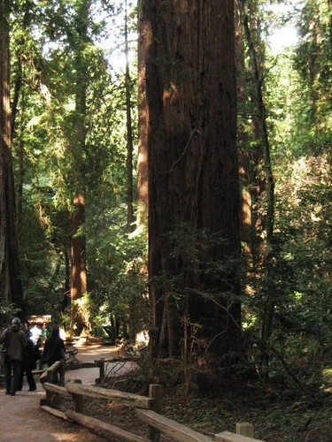redwood5_california | by The Conservation Fund