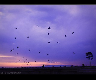 Birds | by COSKUNTUNA ... 3.499.000 ... THANK YOU