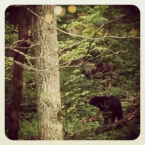 We saw a bear! Her cub was up in a nearby tree. | by Célèste of Fashion is Evolution
