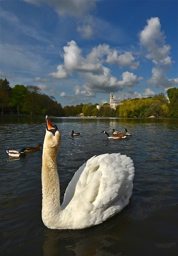 Swan echoing Trent Building | by blinkingidiot