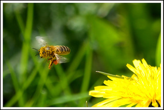 Bee 09a | by Magic Moments by Pippa