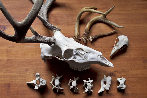 bones and antlers | by fog and swell