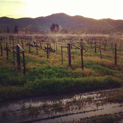 Sprinkler frost protection in the pre-dawn hours of early April | by Cornerstone Cellars, Napa Valley
