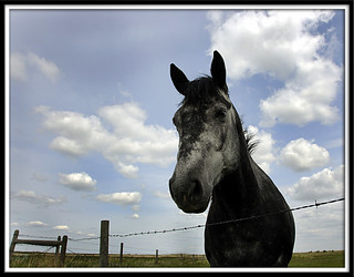 The Young Grey Mare | by popeyes pix