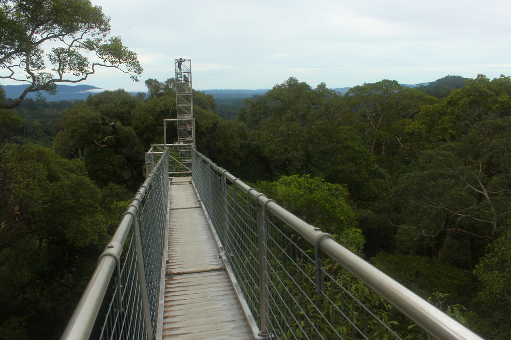 ... canopy walk | by Little Raven & canopy walk | Brendan | Flickr