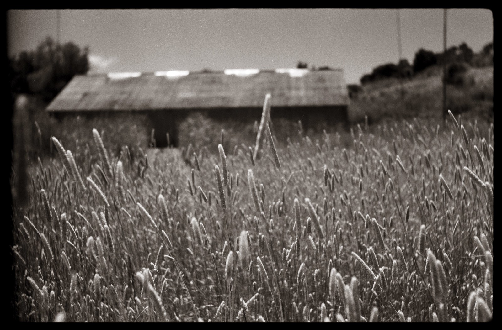 Grasses | by efo