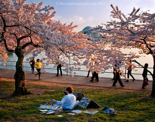 Cherry Tree Artist | by Dwood Photography