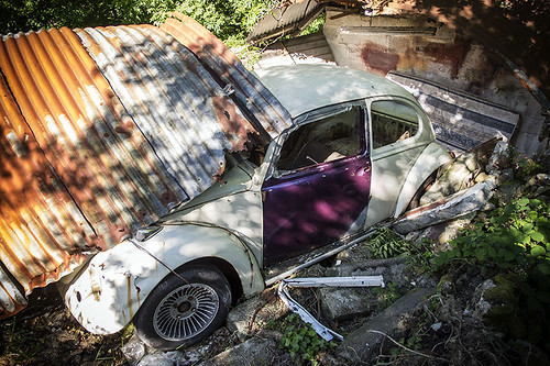 Beetle graveyard | by World of Tim