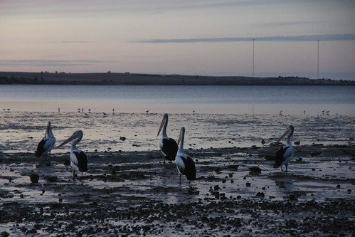 Streaky Bay IMG_4770 | by BeauGiles