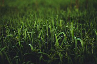 Tall Grass [05.15.12] | by Andrew H Wagner | AHWagner Photo