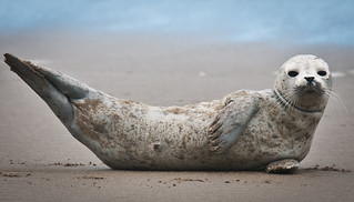 Seal | by NWCouncil