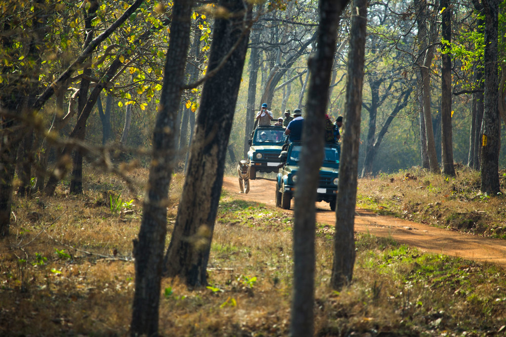 Tadoba National Park, Maharashtra, India