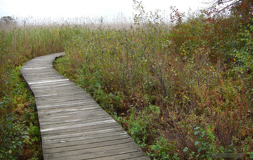 Boardwalk, Plum Island, MA | by Analog retentive