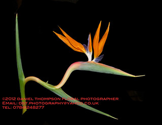 ©2012 Daniel Thompson Floral Photography | by Floral & Garden Photography by Daniel Thompson