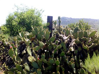 Limestone Canyon Wilderness Park Cacti | by theuser