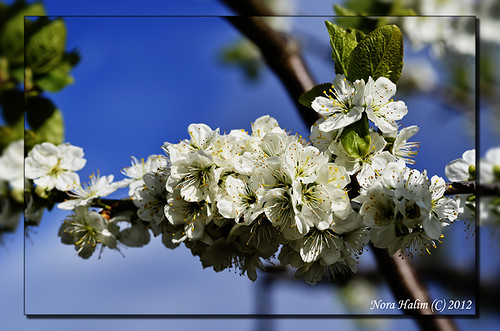 spring colors 2012 | by nora2810