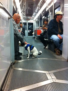 Henry on Muni | by davitydave