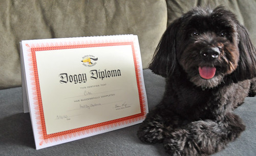 Cuba Americas Gets His Doggy Diploma | by andreaarden