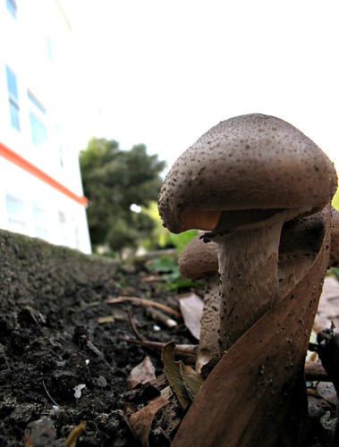 city shrooms | by Steve Kocino