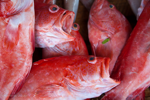 Red fish for sale | by Zalacain