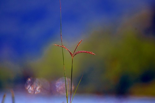grass2 | by raowen