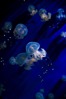 [Jelly on Blue] | by bass_nroll