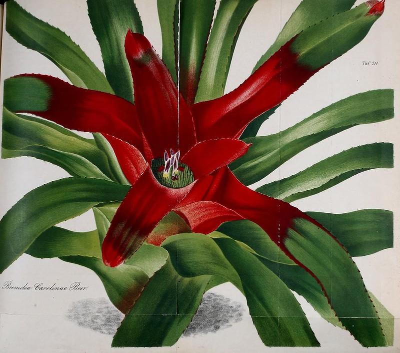 Gartenflora zeitschrift f r garten und blumenkunde bd 6 1857 flickr for Zeitschrift gartenflora